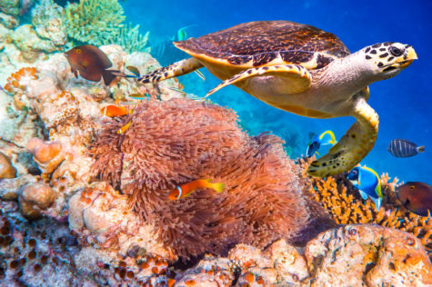 Coral Reefs and the Efforts to Save Them