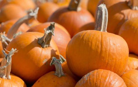 McCall's Pumpkin Patch: Not Just For Kids