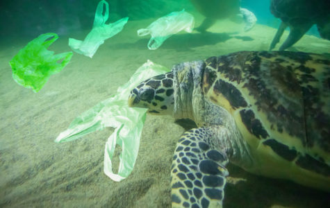 Trash 'R' Us: Our Actions Affect Our Oceans