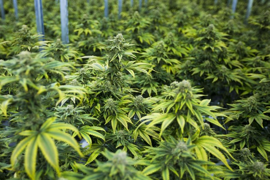 What's Next For The Marijuana Industry?