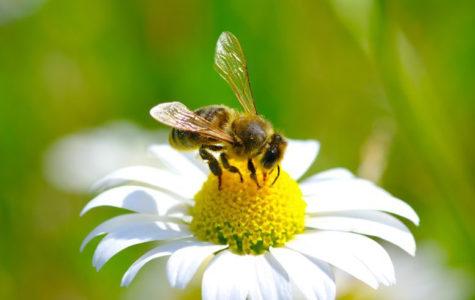 Bye Bye, Bees