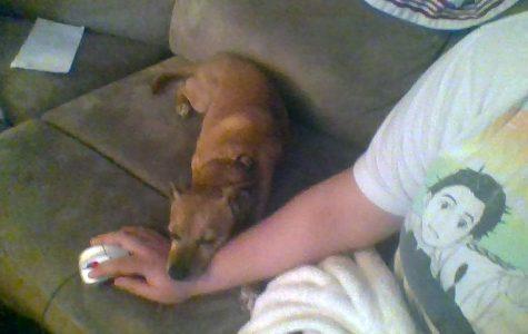 Buttercup Takes a Nap